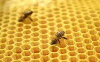 Бизнес-план пчеловодства — бесплатно готовый пример плана пасеки