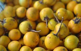 Желтые баклажаны: сорта, фото