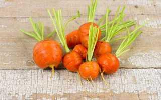 Сорта круглой моркови